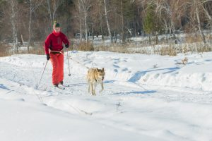 Skijoring – vedno bolj priljubljen pasji zimski šport