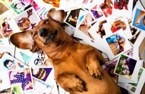 Kako deluje pasji spomin?