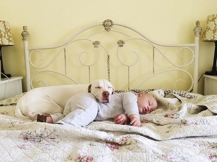 Zlorabljena psička Nora zaupa samo malčku