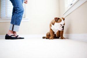 5 ravnanj, ki psa prizadenejo, brez da bi se tega sploh zavedali