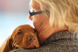 17 resničnih misli o psih