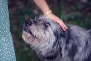 Razumeti psa pomeni razumeti sebe