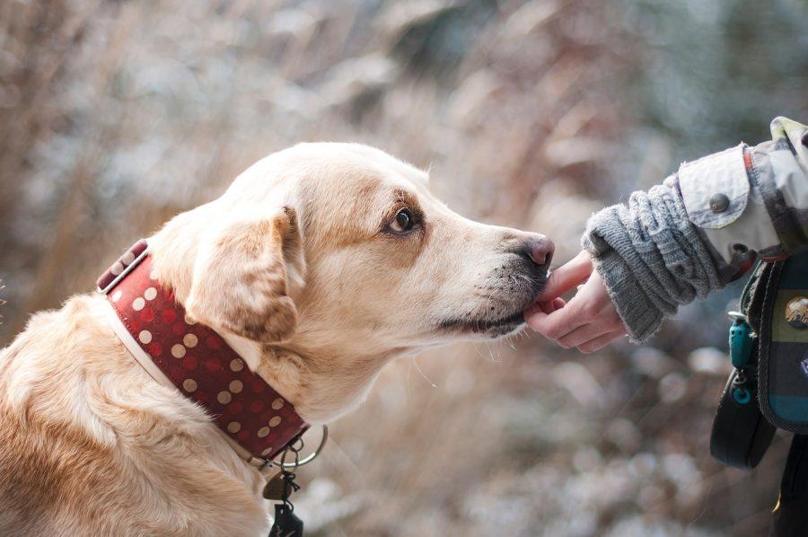 Psi prepoznajo slabe ljudi
