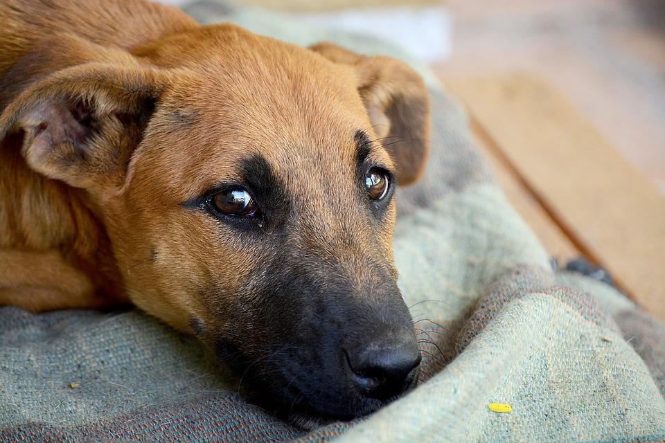 Seznam društev, ki pomagajo živalim v stiski in katerim lahko namenimo del dohodnine