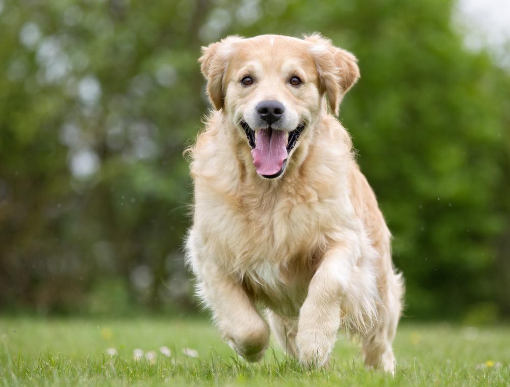 10 veselih pasjih pasem