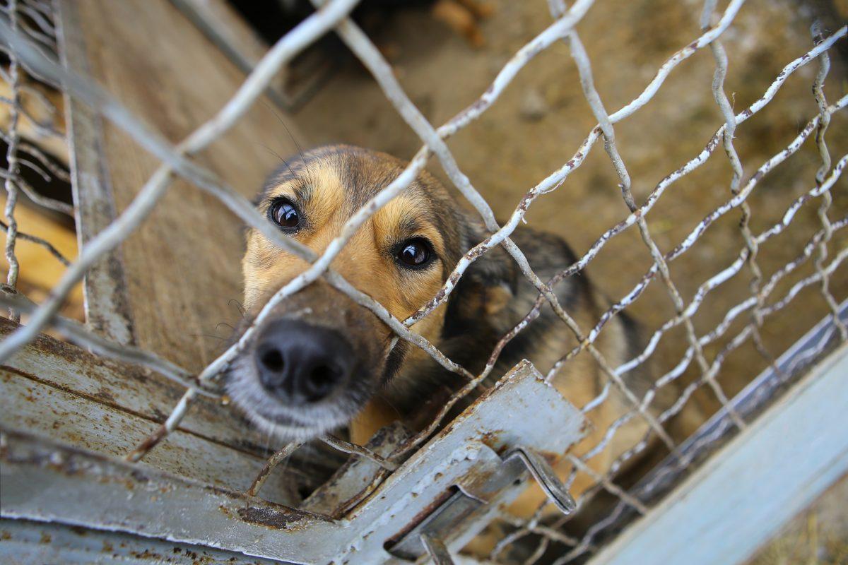 V Pensilvaniji v zapor, kdor pusti psa na mrazu