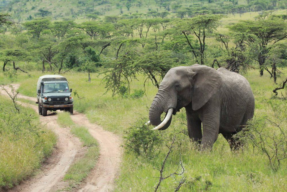 Ubili tri divje lovce, ki so se pretihotapili v nacionalni park, da bi prišli do slonovine