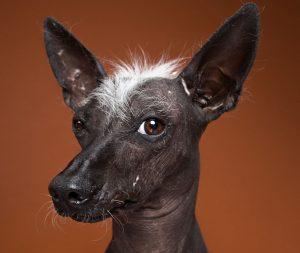 Smešni portreti različnih pasjih osebnosti skozi človeške oči