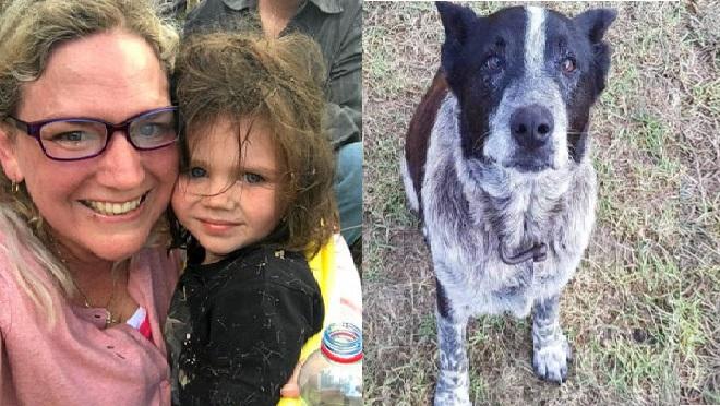 Izgubljeno triletno deklico v avstralski divjini rešil delno slep in gluh 17-letni pes Max
