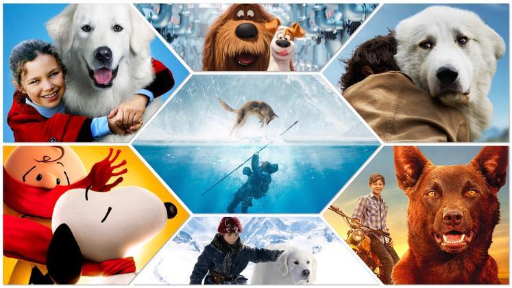 Pasje radosti – 12 pasjih filmov na enem mestu