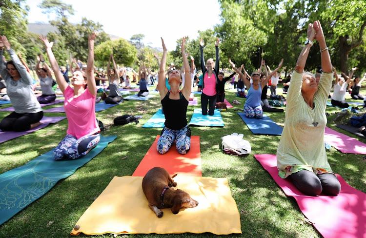 Brezdomni psi obiskali tečaj joge