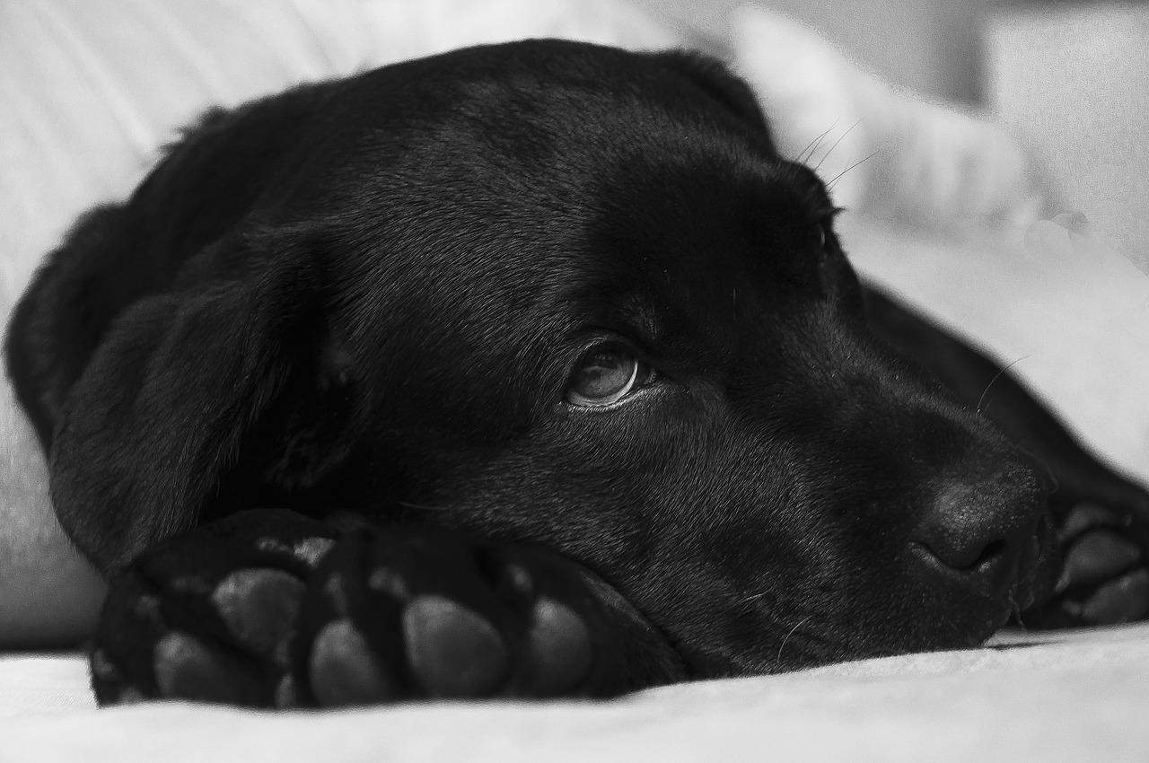 Bruhanje - kdaj k veterinarju?