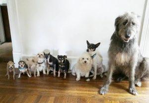 Steve Greig posvaja starejše pse, ki jih nihče noče