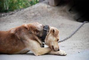 Peticija: Stop pasjim verigam