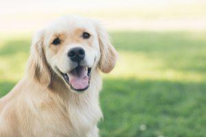 Najboljši pasji sopotniki za tiste, ki bodo prvič imeli psa