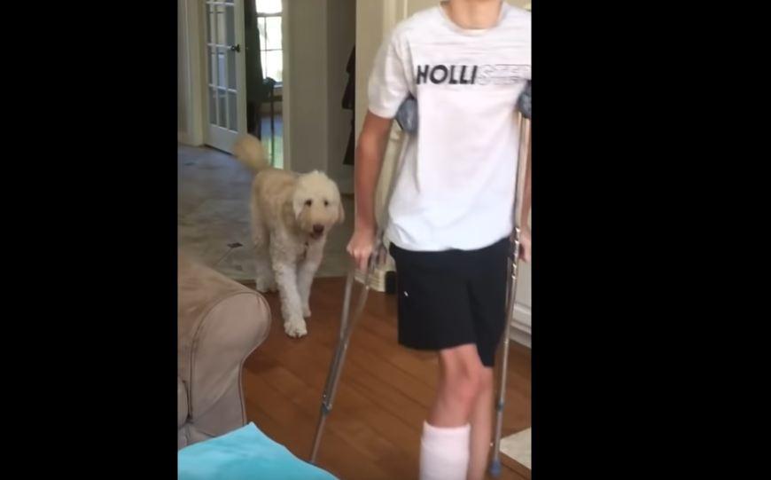 Pes solidarnostno šepa s svojim skrbnikom, ki ima zlomljeno nogo