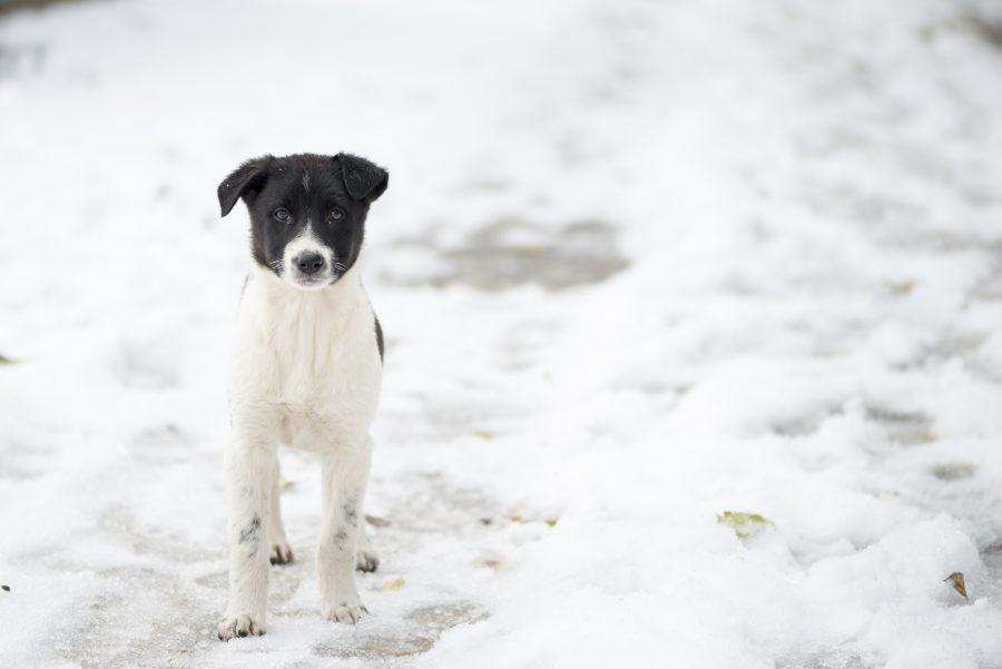 Pogoste zimske norčije, ki psom niso prav nič smešne
