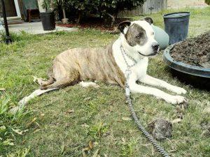 Pes – zanesljiv čuvaj?