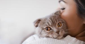 'Mačje osebe' so bolj pogosto samske kot 'pasje osebe', pravi raziskava
