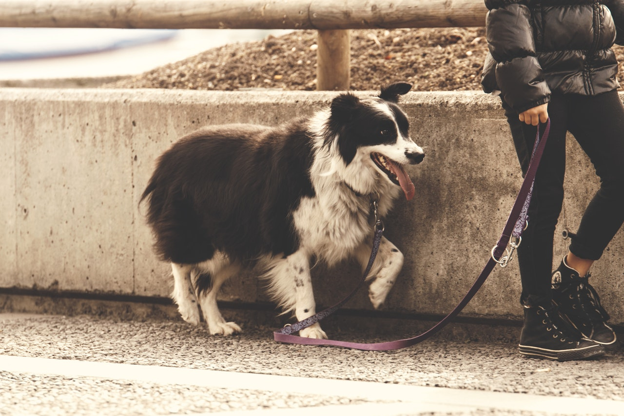V Teheranu prepovedano sprehajanje psov