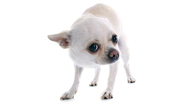 Psa je strah - kako ukrepati?
