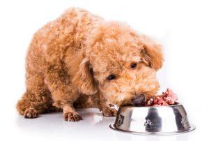 Surova hrana za pse: razlogi ZA in PROTI