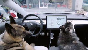 """Tesla predstavil """"Pasji način"""", ki skrbi za varnost psov v vročih dneh"""