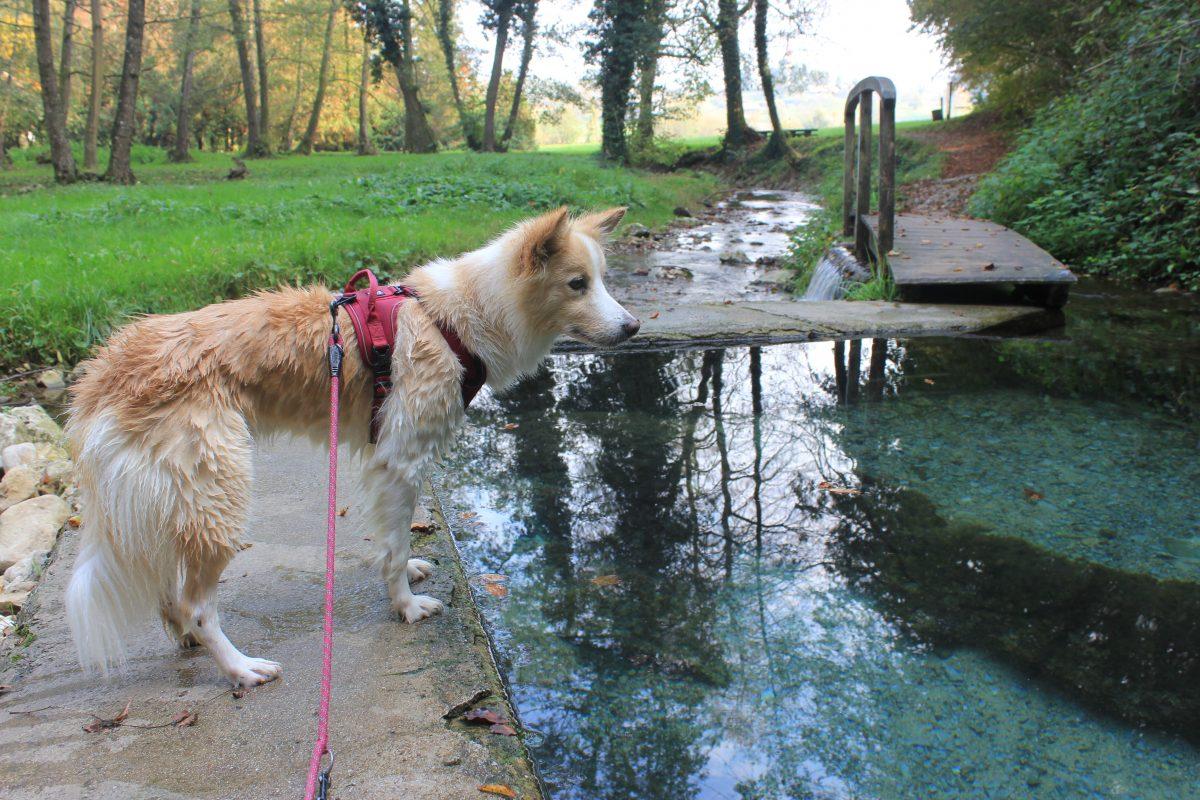 Izlet s psom: Klevevška toplica, na sledi toplim izvirom …