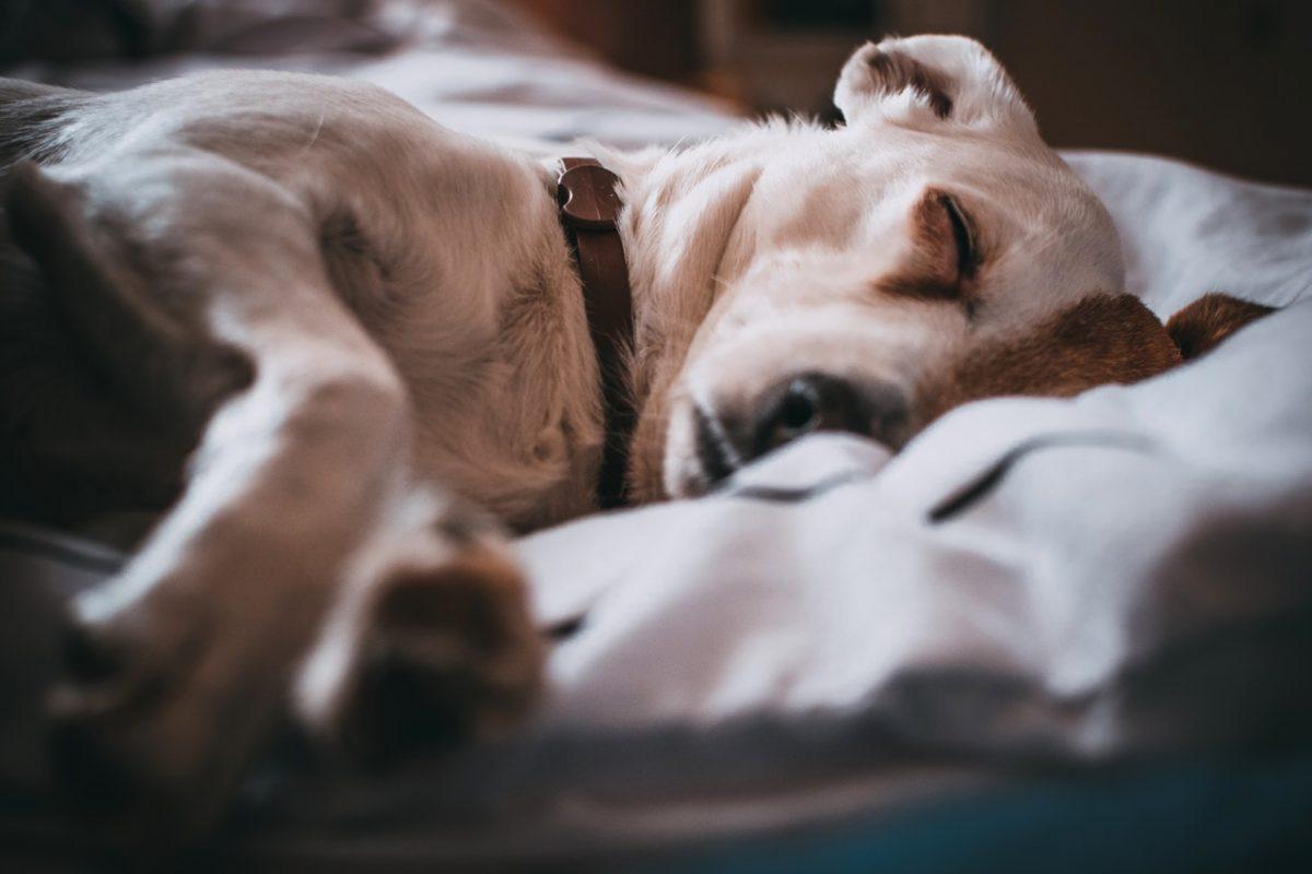 Zopet zastrupljanje psov v Mariboru in Ljubljani