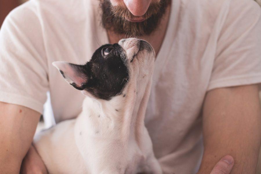 10 pasjih zapovedi