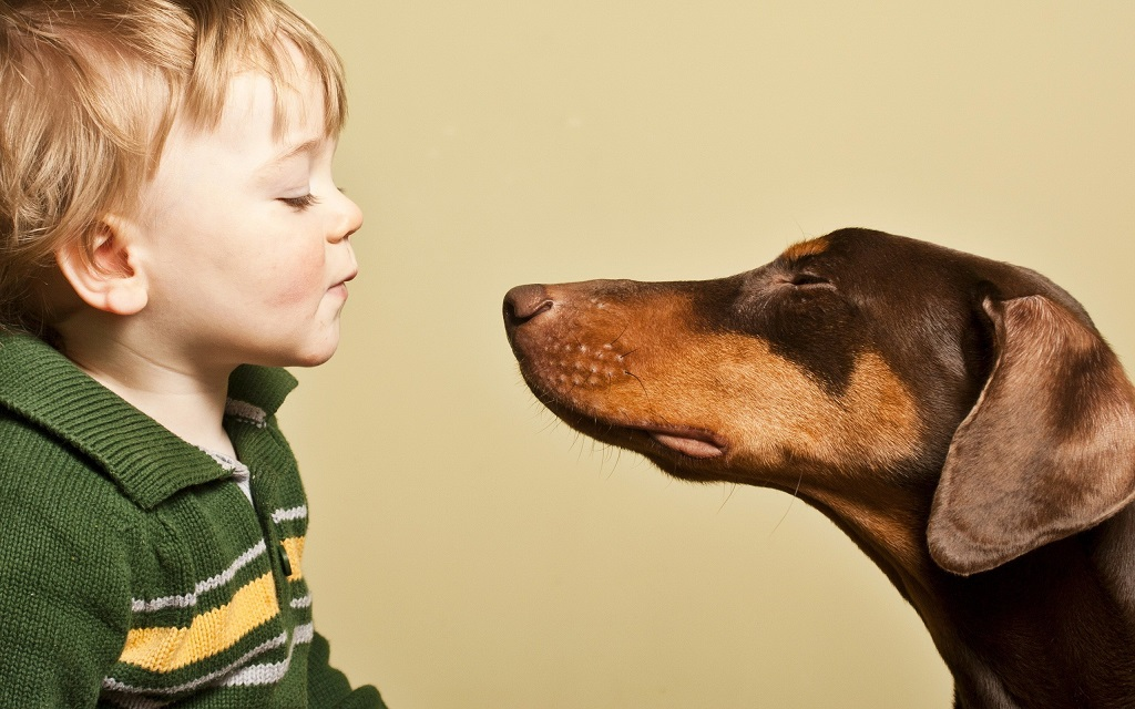 Projekt S šapo v dlani – za poglobljeno empatijo do živali
