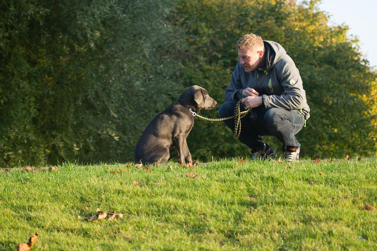 Učenje pasje govorice, 1. korak: opazovanje
