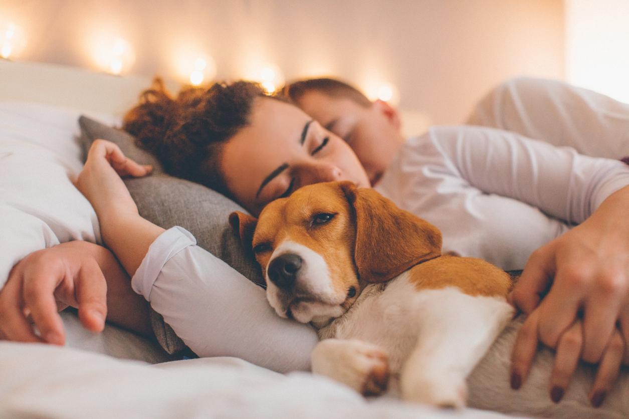 5 razlogov ZA psa v postelji