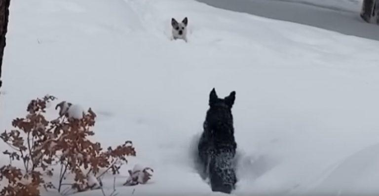 Pes prijateljčka rešil iz globokega snega