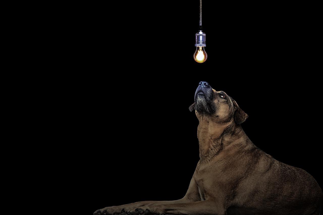 Koliko psov potrebujemo, da zamenjamo žarnico?