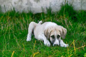 Nekdo zastruplja pse na območju ljubljanskih Dobrunj