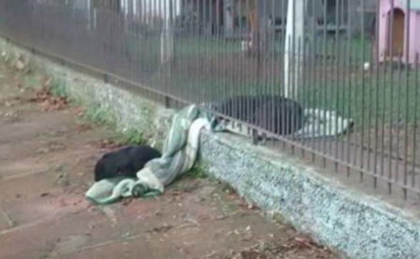 Svojo odejico delil z uličnim psom