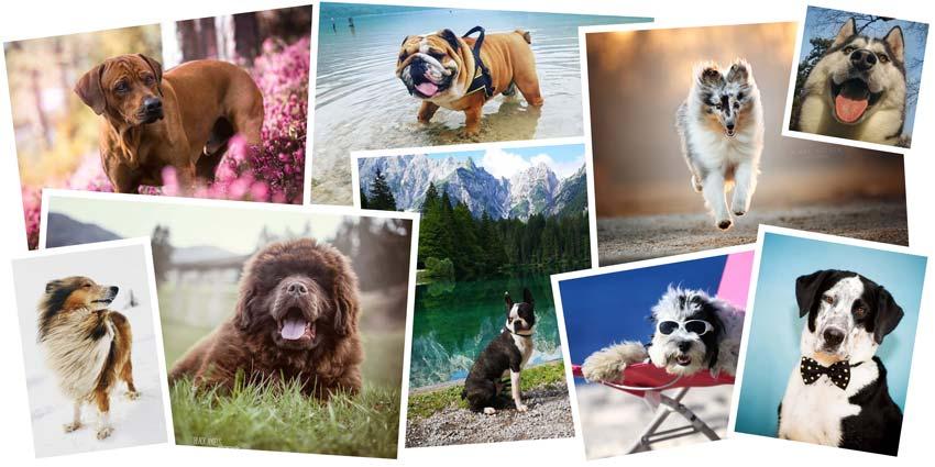 Pasje zvezde: predstavljamo 52 finalistov!