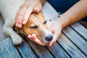 Kongestivno popuščanje srca pri psih