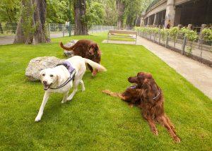 Stroga zakonodaja za pasje skrbnike na Dunaju