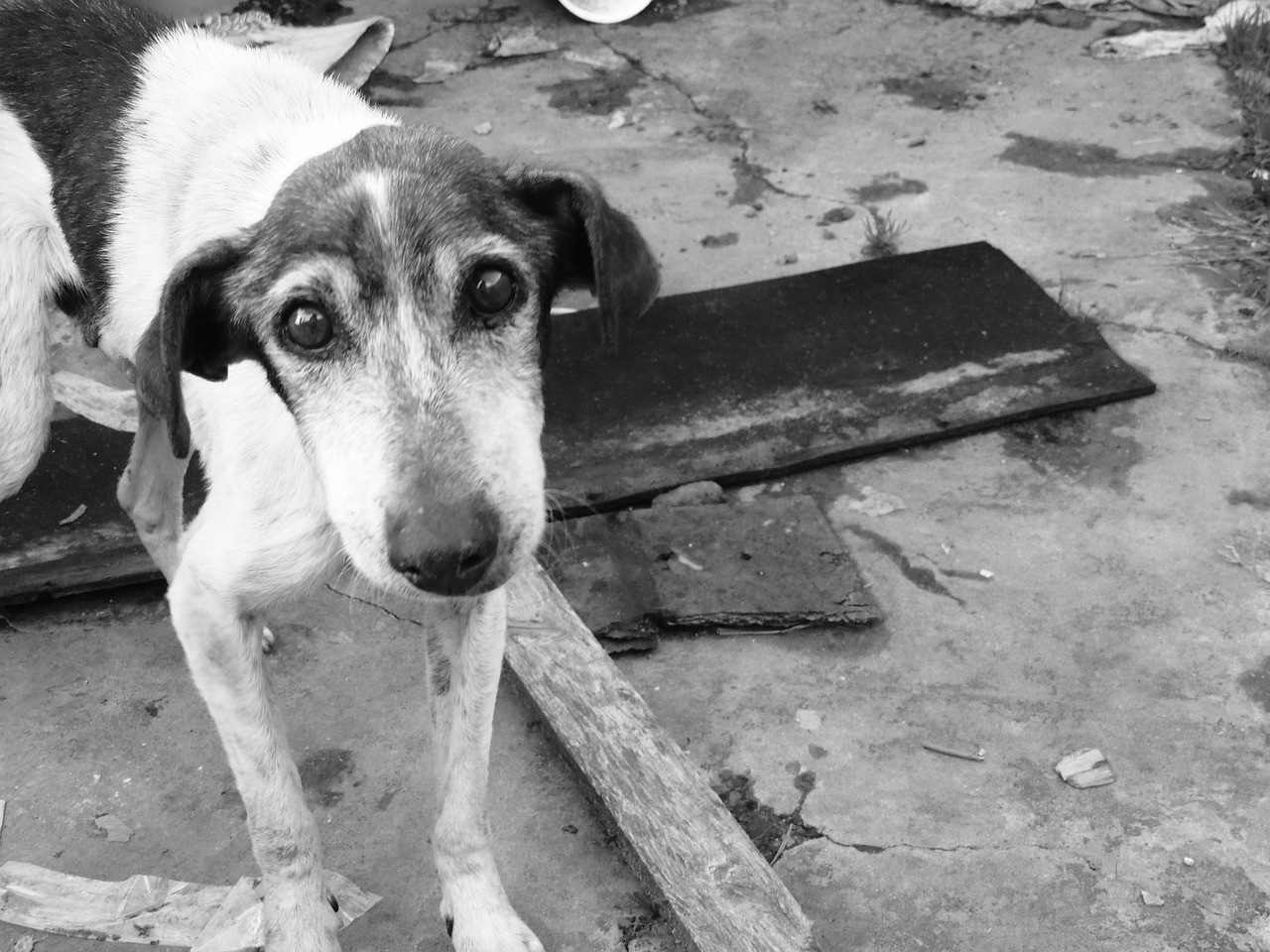 Mednarodni dan zapuščenih živali in kako lahko pomagamo