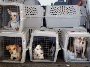 Pes poginil med vožnjo v tovornem delu letala
