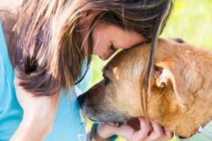 Psi zavohajo, kdaj se bliža epileptični napad