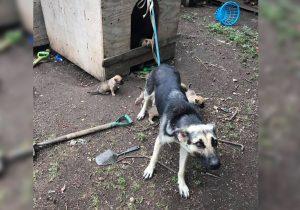 12.000 podpisov proti pasjim privezom predanih ministrstvu