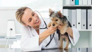 Ob svetovnem dnevu veterinarjev