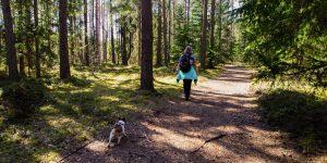 Kako ravnati ob stiku psa s cepivom proti steklini, ki je namenjeno lisici