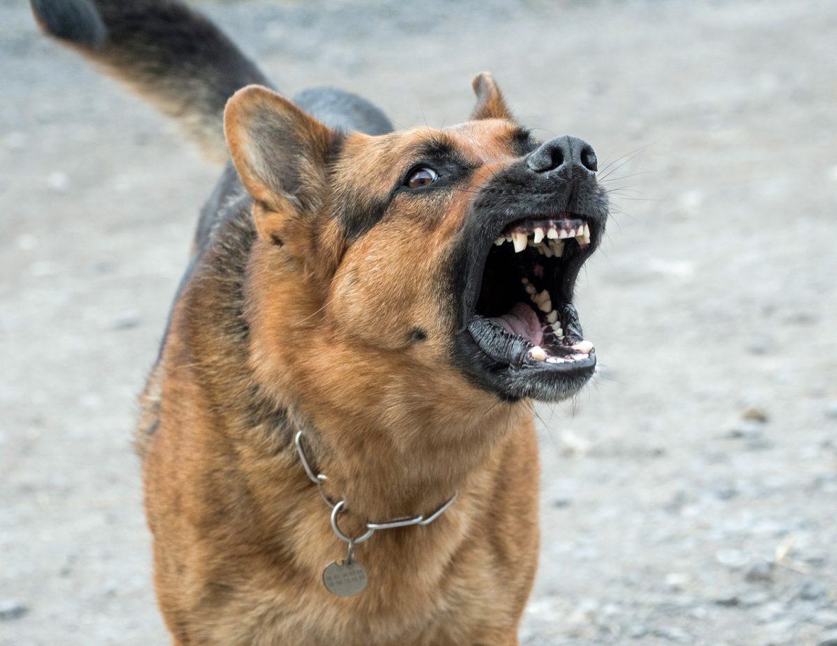 Prevzgoja nevarnih psov