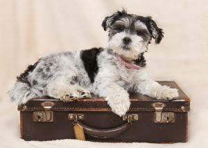 Kaj vse sodi v pasji kovček in potovalno lekarno?