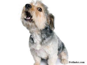 Psihično nestabilen pes