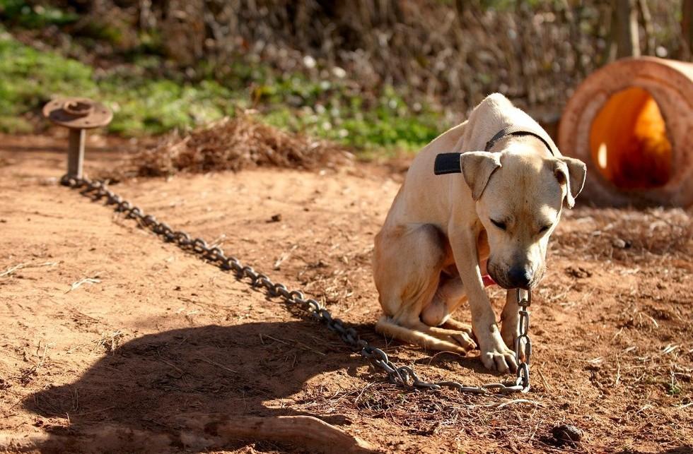 Izkušnje s prijavami zanemarjanja psov so zelo slabe
